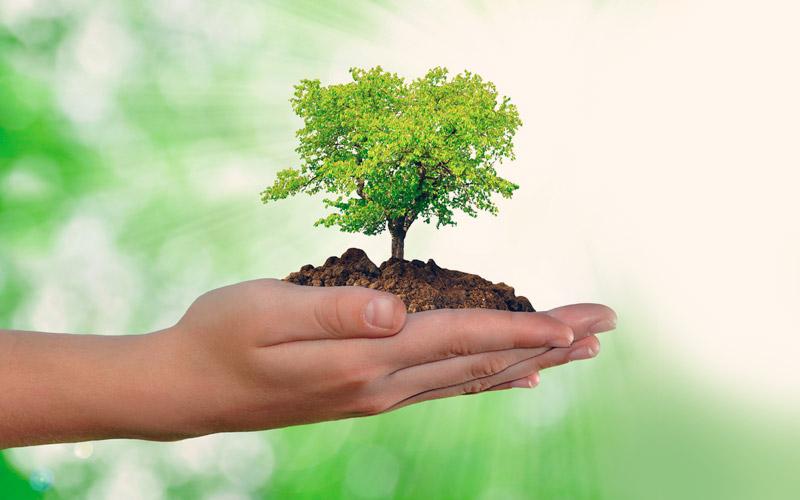 ¿Qué es el medio ambiente para niños?