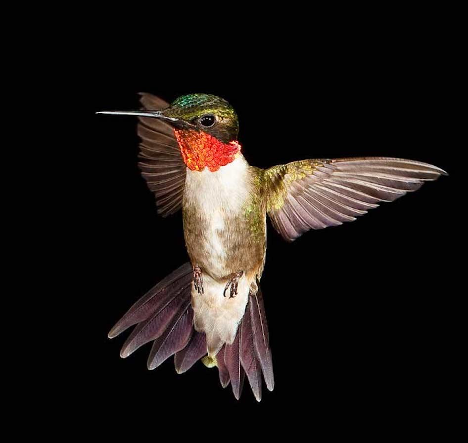 leyenda del colibrí